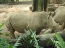 2006 Бали